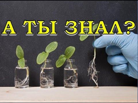 В ЧЕМ СЕКРЕТ БИОСТИМУЛЯТОРОВ? Действие гуматов на растения подобно действию витаминов на животные организмы.
