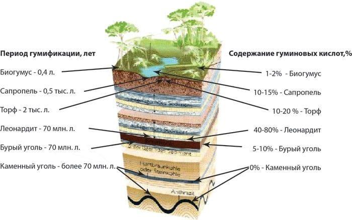 Кратко о действии гуминовых веществ