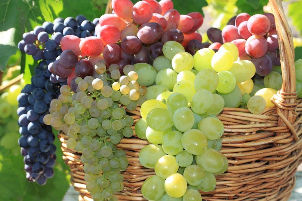 Положительное влияние ТЕРРА 7 на накопление сахаров и общую урожайность винограда.